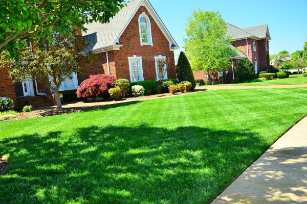 A few tips we've found for having a great yard this summer