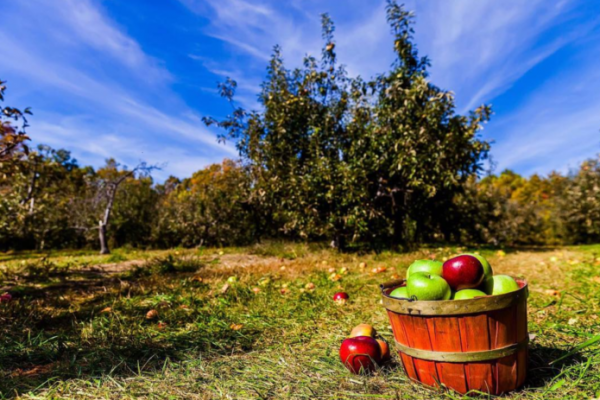 It's September, so it's time to pick apples in these parts